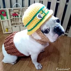ニット帽/腹巻き/ヘルメット/安全/フレンチブルドッグ/犬/... 手編みの安全ヘルメットとらくだ色の腹巻の…