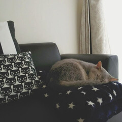 モノトーン/クッション/IKEA家具/ネコ/猫と暮らす/ペット/... *まったりすやすや*