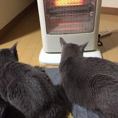「やっぱりハロゲン暖かいねー🤗」(1枚目)