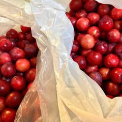 フルーツ アメリカンチェリー2袋も貰いましたー✨✨…