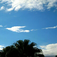 幸せの鳥/鳥みたいな雲/空 動物園で ふと空を見上げたら 鳥さんみた…