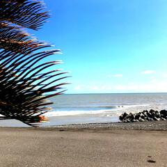水平線/ハマゴウ/海/太平洋 子ども達と海へぶらり。 ハマゴウの花が咲…