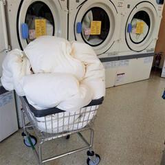 東京西川 SEVENDAYS 羽毛布団 ホワイト シングル 厳しい西川基準をクリア 西川品質 ダウン85% 日本製 KA09002504W(布団干し)を使ったクチコミ「羽毛布団はコインランドリーで丸洗いします…」