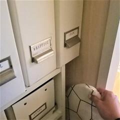 片づけ/収納/アイロン収納/隙間収納/暮らし アイロンを収納しているファイルボックスの…