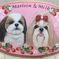 シーズー/犬/肖像画/ペットロス シーズーのマリリン&ミルクちゃん