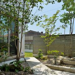 建築/庭/坪庭/雑木/コンクリート/テラス/... 芝庭に続くアプローチ坪庭