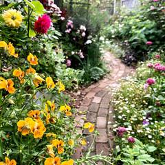 癒される時間/レンガの小道diy/手作りのお庭/季節を感じる暮らし/シェードガーデン/ナチュラルガーデン/... サンルームとデッキの前の裏庭です。明るい…