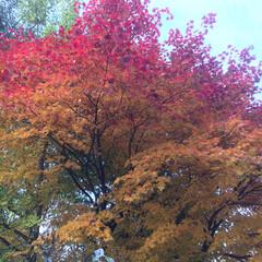 「空と秋 見事な秋です。 日本で何か起こっ…」(3枚目)