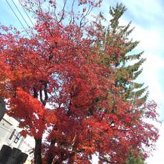 「空と秋 見事な秋です。 日本で何か起こっ…」(2枚目)