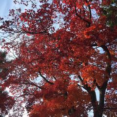「空と秋 見事な秋です。 日本で何か起こっ…」(1枚目)