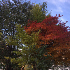 「空と秋 見事な秋です。 日本で何か起こっ…」(4枚目)