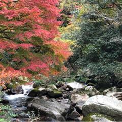 紅葉狩り/秋/おでかけ 今日はお天気はあまり良くなかったけど今年…