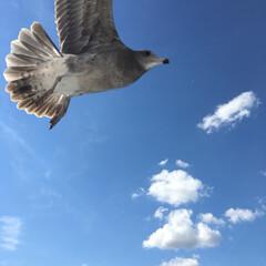 海/鳥/日本海 富山県氷見市 平日適度な人混み‼︎ 観光…