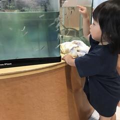1歳6ヶ月/娘/魚/ドクターフィッシュ ドクターフィッシュに興味津々な末っ子ちゃ…