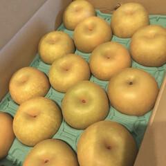 フルーツ/果物/幸水/梨 実家から送られてきた大量の梨🍐 これ2段…