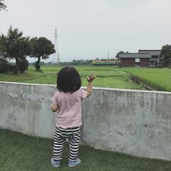 娘/1歳5ヶ月/電車 電車に手を振る末っ子ちゃん。 家から電車…