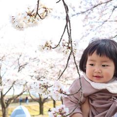 1歳3ヶ月/桜/お花見/LIMIAおでかけ部/おでかけ 少し前だけど、お花見に行った時の写真🌸 …