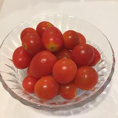 採れたて野菜/じいじ作/プチトマト/トマト じいじ作のトマト🍅 フルーツトマトかと思…