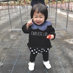 1歳2ヶ月/娘/フルーツ/イチゴ/いちご狩り/おでかけ/... イチゴ大好きな末っ子ちゃん♡ 小さいのか…