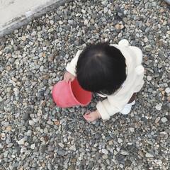 石集め/1歳2ヶ月/娘/お散歩 今日も黙々とバケツに石を集める人。 子供…