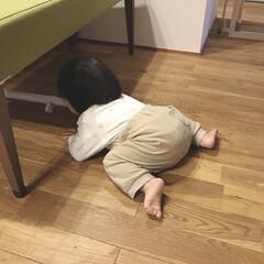 掃除機/お手伝い/真似っこ/1歳3ヶ月/娘 掃除機をかける末っ子ちゃん。 掃除機の先…