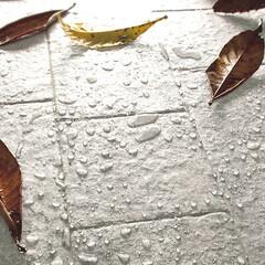 タイル/エクステリア/床タイル/ガーデニング/玄関/玄関ポーチ/... 涼しい風に秋の気配を感じます😊 【60%…