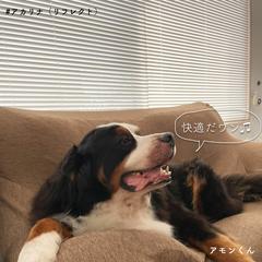 おうちBOXアカリナ/アカリナ をつけて投稿しよう!/ペット/犬のいる暮らし/犬のいる生活/犬と暮らす/... 【節電効果抜群!エアコンの効きを良くする…(3枚目)