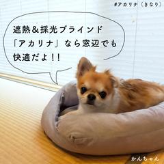おうちBOXアカリナ/アカリナ をつけて投稿しよう!/ペット/犬のいる暮らし/犬のいる生活/犬と暮らす/... 【節電効果抜群!エアコンの効きを良くする…(2枚目)
