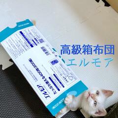 快適な眠りを…/ティシュ/白ネコ/白猫/白ねこ/子ネコ/... 先日保護した白猫「テト」💕 動物病院で処…
