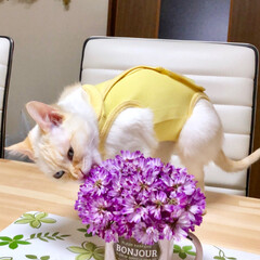 プランター栽培/チューリップ/猫との生活/猫と暮らす/猫のいる暮らし/猫/... 先日行った近所のレンゲ畑✨✨ 結構しっか…(8枚目)