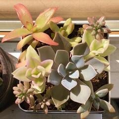 窓辺/秋/紅葉/Greenのある暮らし/green/植中毒/... おはようございます!😄 過ごし易い気温に…
