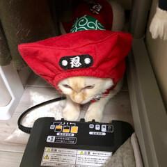 猫/ねこ/にゃんこ/猫のいる暮らし/猫と暮らす/猫との暮らし/... 節電忍者 テト 参上❗️ニャンニャン‼️(2枚目)
