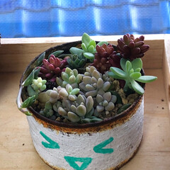 猫のいる暮らし/多肉植物がある暮らし/植物のある暮らし/コタツは魔物/リメ缶DIY/リメ缶/... 昨日はお家でリメ缶作り〜😊 だって外は寒…