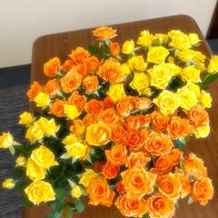 ドライフラワー予備軍/切り花/お花/スプレー薔薇/バラ/薔薇/... 暑くて最近ご無沙汰してた花屋さんに昨日お…