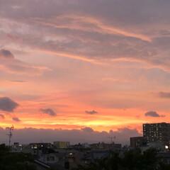 夕焼け雲/夕陽/夕日/祭り/夏祭り/夕焼け/... 今日は近所の市民祭りに行ってきました。 …(9枚目)