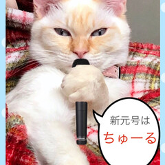 新元号/連投すみません💦/猫との暮らし/猫と暮らす/猫のいる暮らし/春のフォト投稿キャンペーン/... 新元号は「いなば」との接戦の末、「ちゅー…