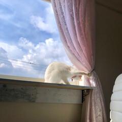 猫のいる暮らし/猫と暮らす/エイプリルフール/窓辺/多肉/植中毒/... 多肉屋さん はじめました❗️(3枚目)