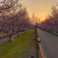 寝屋川/大阪/風景/公園/夕焼け/夕景/... 同じく 2018年4月上旬、近所の公園の…