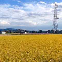 お花畑/花/高槻市/淀川/秋空/風景/... 先週、隣町のコスモスロードを見に行った時…(5枚目)