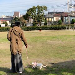 公園デビュー/にゃん歩/散歩/白ネコ/白猫/ネコ/... テトさん💕 ピーンと伸びて寝ていたので測…(3枚目)