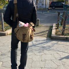 公園デビュー/にゃん歩/散歩/白ネコ/白猫/ネコ/... テトさん💕 ピーンと伸びて寝ていたので測…(2枚目)