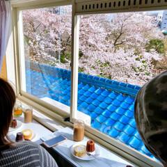 窓辺の風景/窓辺/お花見/花見/桜/さくら/... 投稿し忘れてた今年の桜達🌸 友人と自宅窓…(10枚目)