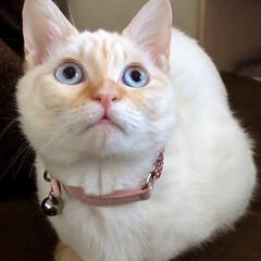新元号/連投すみません💦/猫との暮らし/猫と暮らす/猫のいる暮らし/春のフォト投稿キャンペーン/... 新元号は「いなば」との接戦の末、「ちゅー…(10枚目)