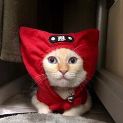 猫/ねこ/にゃんこ/猫のいる暮らし/猫と暮らす/猫との暮らし/... 節電忍者 テト 参上❗️ニャンニャン‼️(3枚目)
