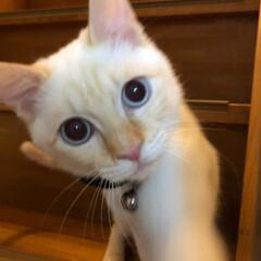 新元号/連投すみません💦/猫との暮らし/猫と暮らす/猫のいる暮らし/春のフォト投稿キャンペーン/... 新元号は「いなば」との接戦の末、「ちゅー…(7枚目)