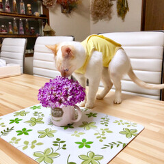 プランター栽培/チューリップ/猫との生活/猫と暮らす/猫のいる暮らし/猫/... 先日行った近所のレンゲ畑✨✨ 結構しっか…(7枚目)