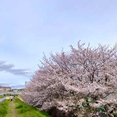 窓辺の風景/窓辺/お花見/花見/桜/さくら/... 投稿し忘れてた今年の桜達🌸 友人と自宅窓…(5枚目)