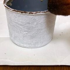 猫のいる暮らし/多肉植物がある暮らし/植物のある暮らし/コタツは魔物/リメ缶DIY/リメ缶/... 昨日はお家でリメ缶作り〜😊 だって外は寒…(4枚目)