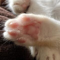 にくきゅう/肉球/保護猫/愛猫/ねこ/ネコ/... 肉球ヤバい!😍💕💕💕