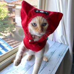 猫/ねこ/にゃんこ/猫のいる暮らし/猫と暮らす/猫との暮らし/... 節電忍者 テト 参上❗️ニャンニャン‼️